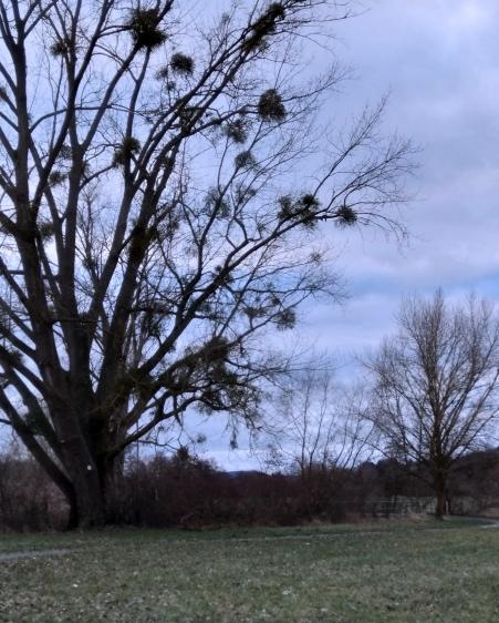arbre_gui_4